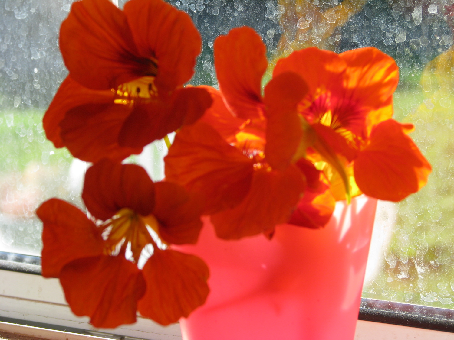 nasturtiums in a red cup