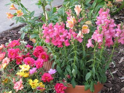 After dormancy, we bloom