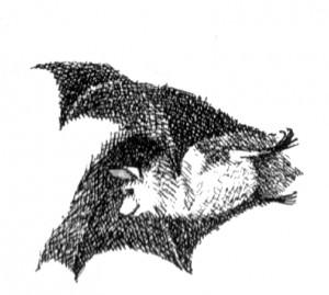 bat-poet by maurice sendak