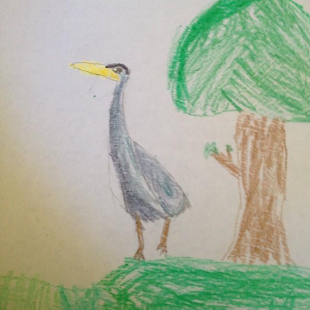 rilla's heron