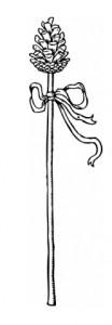 Thyrsus staff (Wikimedia Commons)