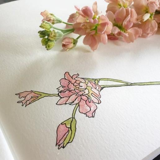 watercolor stock