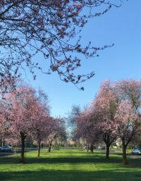I Heart Portland in Spring