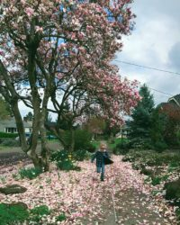 boy running through fallen pick blossoms under a tulip magnolia