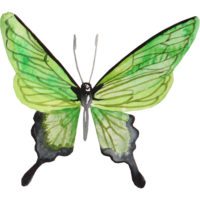 watercolor painting of a green moth