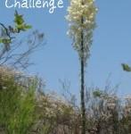 The 100 Species Challenge