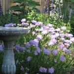 Garden Notes, Late April