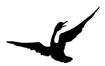 """Sometimes I think p'raps I'm a bird"": Naturalists in Literature"