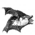 Poetry Friday: from The Bat-Poet