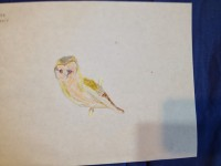 Rilla's Barn Owl (finished)