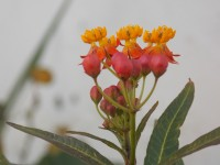 What I read today: Thursday
